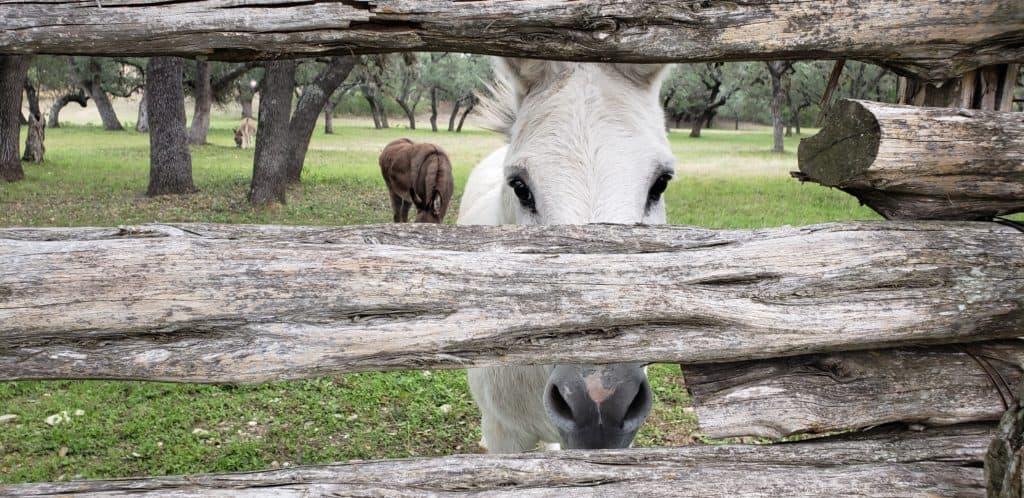 Ayausaca Ranch - Jess Janda